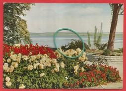 Insel Mainau Im Bodensee, Ufergarten Mit Blick Auf Birnau - Alemania