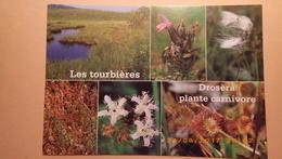 Les Tourbières. Drosera , Plante Carnivore - Fleurs