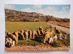 CPSM - (83) - FAYENCE - VUE GENERALE - BREBIS - SHEEP - MOUTON -  PHOTO VERITABLE -   R4749 - Fayence