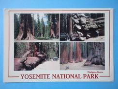 Mariposa Grove - Yosemite National Park - California - Vedutine - Affrancatura Meccanica Rossa - Yosemite