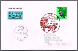 SETAS - MUSHROOMS - CHAMPIGNONS. Aida, Nagano, Japon, 2006 - Funghi