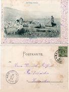 Schwäbifches Volfsteben - Sch£äterleben (Troupeau De Moutons Et Berger - Incunable 1898 (99152) - Andere