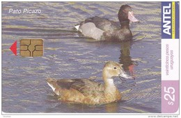 Nº 416 TARJETA DE URUGUAY DE ANTEL DEL PATO PICAZO (PAJARO-BIRD) - Uruguay