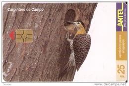 Nº 117 TARJETA DE UN PAJARO DE URUGUAY CARPINTERO DE CAMPO (BIRD) - Uruguay