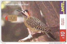 Nº 202 TARJETA DE UN PAJARO DE URUGUAY CARPINTERO NUCA ROJA (BIRD) - Uruguay