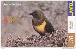 Nº 201 TARJETA DE URUGUAY DE ANTEL DE UN PECHO AMARILLO (PAJARO-BIRD) - Uruguay