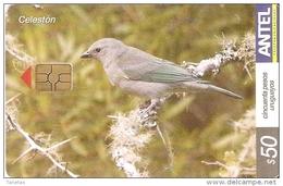 Nº 323 TARJETA DE URUGUAY DE EL CELESTON (PAJARO-BIRD) - Uruguay