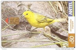 Nº 380 TARJETA DE URUGUAY DE EL DORADO (PAJARO-BIRD) - Uruguay