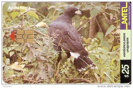 Nº 152 TARJETA DE UN PAJARO DE URUGUAY AGUILA NEGRA (BIRD-EAGLE) - Uruguay