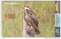 Nº 151 TARJETA DE URUGUAY DEL GAVILAN CARACOLERO (BIRD-PAJARO) EAGLE-AGUILA - Uruguay