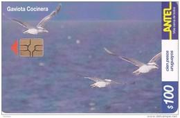 Nº 154 TARJETA DE URUGUAY DE ANTEL DE UNA GAVIOTA COCINERA (PAJARO-BIRD) - Uruguay