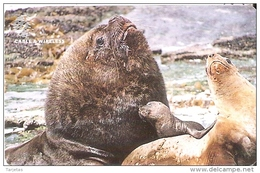 TARJETA DE FALKLAND ISLANDS DE UNOS LEONES MARINOS   (SEAL-FOCA) - Falkland Islands