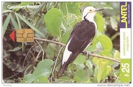 Nº 116 TARJETA DE UN PAJARO DE URUGUAY CARPINTERO BLANCO (BIRD) - Uruguay