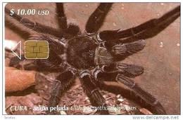 105 TARJETA DE CUBA DE UNA ARAÑA PELUDA  (SPIDER) - Cuba