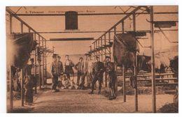 5.Tirlemont - 15me Régiment D'artillerie - Ecurie DESAIX - Tienen