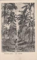 Fidji - Fiji  -  Cocoanut Grove   - 2 Scan - Figi