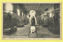 * Tervuren - Tervueren (Vlaams Brabant) * (Nels, Ern Thill) Musée Du Congo Belge, Cranes D'éléphants, Olifant, Museum - Tervuren
