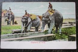 Myamar Burma Elephants At Work   Cpa Burma - Myanmar (Burma)