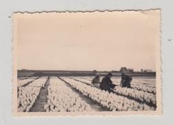HILLEGOM / CHAMP DE JACINTHES 1947 (PHOTO 9X6) - Pays-Bas