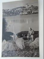 D152940  Fishing Hungary  Balaton - Pêche