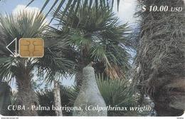 114 TARJETA DE CUBA DE LA PALMA BARRIGONA - Cuba