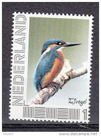 Nederland 2014 Vogel, Bird : Ijsvogel, Kingfisher - Neufs