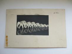 ELEPHANTS , MIRROR IMAGE , NEW YEAR GREETINGS , OLD POSTCARD , K0 - Monnaies (représentations)