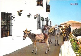 ESPANA Espagne Spain ( Andalucia Malaga ) MIJAS : Servicio Burro TAXI - Anes - CPSM GF 1980 ( Spanien Spange Spagna ) - Málaga
