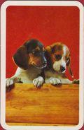Joker Hond Chien Dog Speelkaart - Cartes à Jouer Classiques