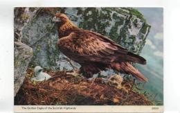 Postcard - British Birds - The Golden Eagle - Card No 20533 Very Good - Cartes Postales