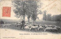 16 UN PATURAGE DANS LA CHARENTE BERGER - France