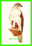 OISEAUX - LA BUSE ROUILLEUSE - THE FERRUGINOUS HAWK -  1992 SÉLECTION READER'S DIGEST - - Oiseaux