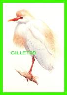 OISEAUX - LE HÉRON GARDE-BOEUFS - THE CATTLE EGRET  -  1992 SÉLECTION READER'S DIGEST - - Oiseaux