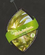 # PINEAPPLE DULCISSIMA Size 8 Fruit Tag Balise Etiqueta Anhanger Ananas Pina Costa Rica - Fruits & Vegetables
