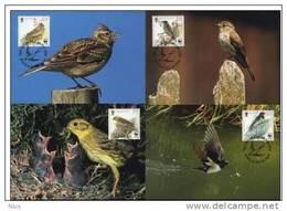 Isle Of Man 2000 WWF W.W.F. Set X4 Maximum Cards Swallow Yellowhammer Skylark Spotted Flycatcher Birds Bird Fauna - Maximum Cards
