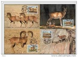 Afghanistan 1998 WWF W.W.F. Afghan Maximum Cards Goat Set X4 Fauna Mouton Urial - Maximum Cards