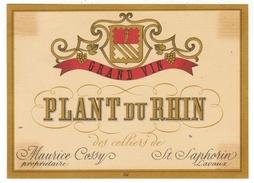Rare // Plant Du Rhin, Maurice Cossy Vigneron à St.Saphorin  Vaud // Suisse - Bateaux à Voile & Voiliers