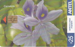 Nº 465 TARJETA DE URUGUAY DE ANTEL DEL CAMALOTE (FLOR-FLOWER) - Uruguay