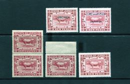 JERSEY AGRICULTURE CATTLE COW SPECIMEN REVENUES - Ohne Zuordnung