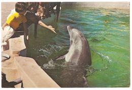 Redwood City - California - Marine World Africa USA - Porpoise Petting Pool - Dolphin / Dolfijn - San Francisco