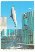 Redwood City - California - Marine World Africa USA - Mr. Spock - Dolphin / Dolfijn - San Francisco