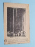 Les Boulets Conservés à Notre-Dame ( Desaix ) Anno 1920 ( Zie Foto Details ) !! - Halle