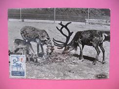 Carte-Maximum     1957 - Rennes - Maximum Cards & Covers