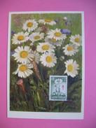 Carte-Maximum     1959 - Fleurs Marguerites - Maximum Cards & Covers