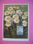 Carte-Maximum     1959 - Fleurs Marguerites - Tarjetas – Máximo