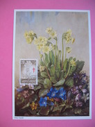 Carte-Maximum     1959 - Fleurs Primevères - Maximum Cards & Covers