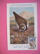Carte-Maximum     1963 - Oiseaux  Gravelot  N° 366 - Cartes-maximum