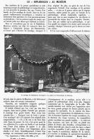 """LE """" DIPLODOCUS """"  Du MUSEUM D'HISTOIRE  NATURELLE De PARIS 1908 - Fossiles"""