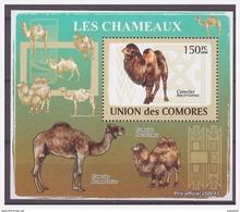 0243 Comores 2009 Kameel Camel Chameaux S/S MNH - Autres