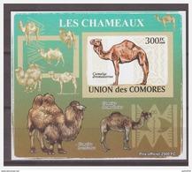 0195 Comores 2009 Kameel Camel S/S MNH Imperf - Autres